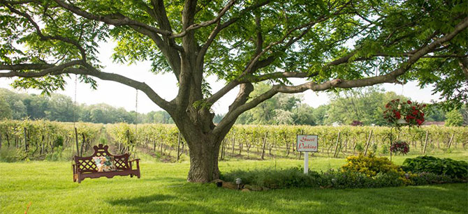 lake erie wine country events